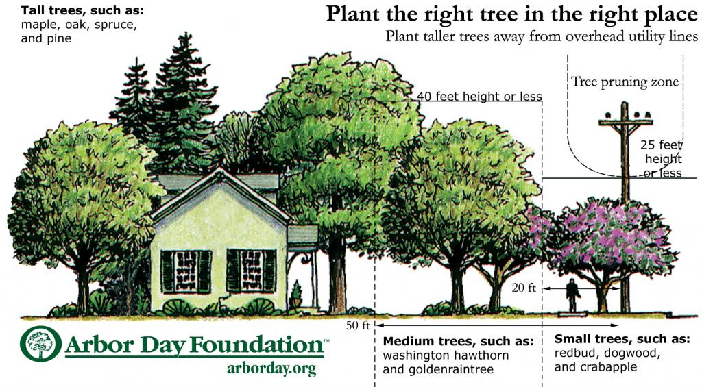 Plant The Right Tree In The Right Place Comed An